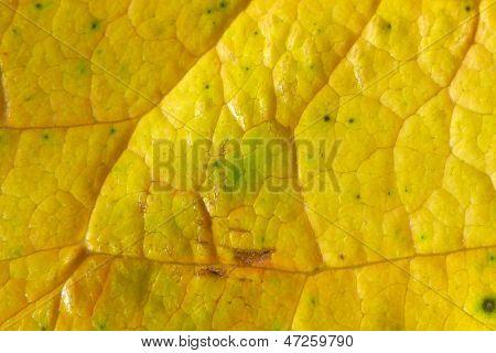 yellow leaf macro, beautiful nature photo
