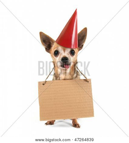 a goofy chihuahua holding a sign with a birthday hat on