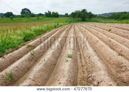 Plow In A Village In Summer