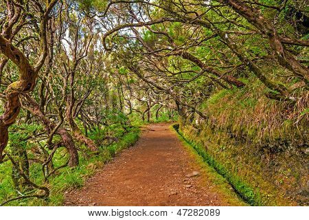 In The Forest, Madeira