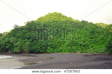 Green Foliage In Tropical Destination With Beach And Ocean