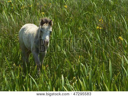 Wild Foal