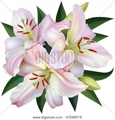 White Lily Isolated on White Background. Rasterized Version