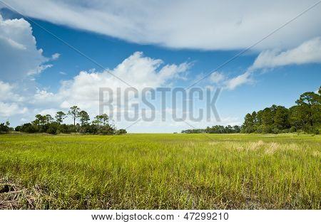 Hunting Island Marsh