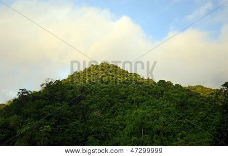 Mountain In Panama With Tropical Foliage