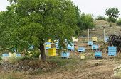 foto of bee keeping  - Meadow with bee hives and tree - JPG