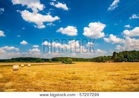 Field With Ricks