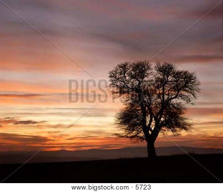 Tree On Sunset