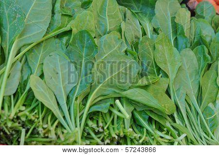 Green Salad Vegetables