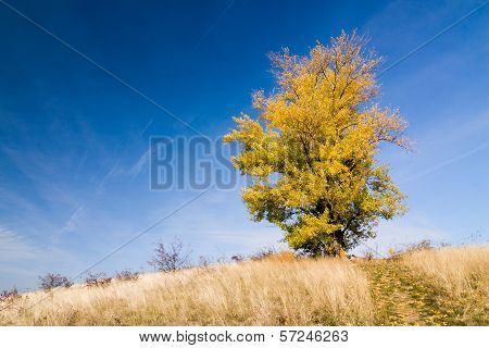 Autumn landscape with yellow-colored aspen