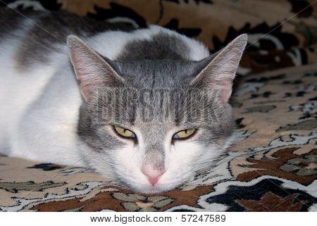 Sight of cat