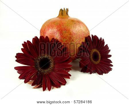 gerbera with pomegranate