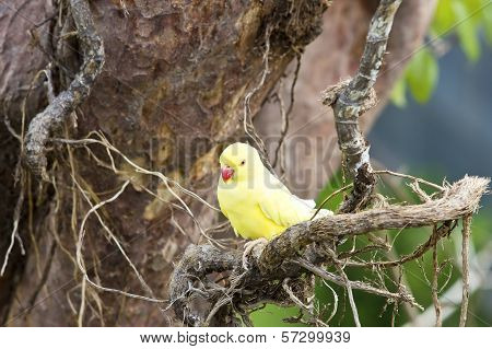 Yellow Parrot On Tree Branches