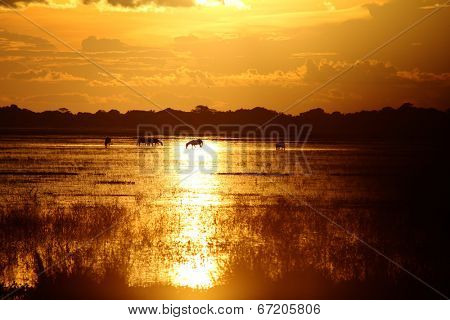 Sunset and horses in a Los Llanos tropical grassland in Venzuela