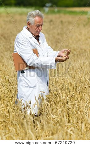 Agronomist On Field