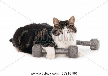 Gym cat
