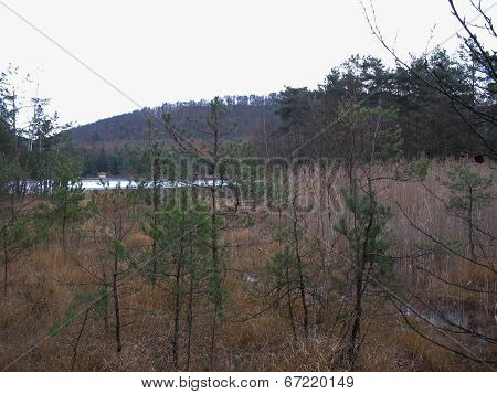 Bog In The Vosges