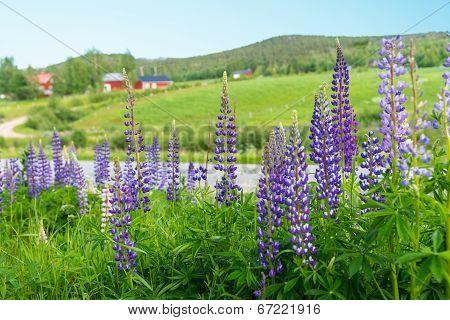 Swedish Rural Summer Landscape