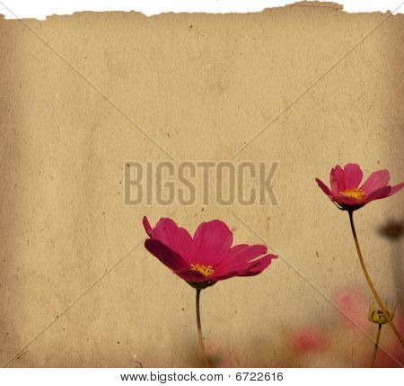 old-fashioned artistic flower