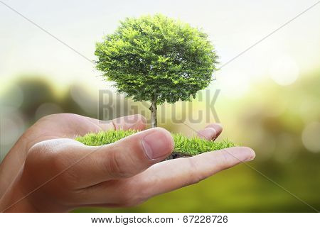 Small tree, plant in the hand