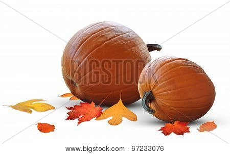 Fat pumpkin harvest ready for holiday meals