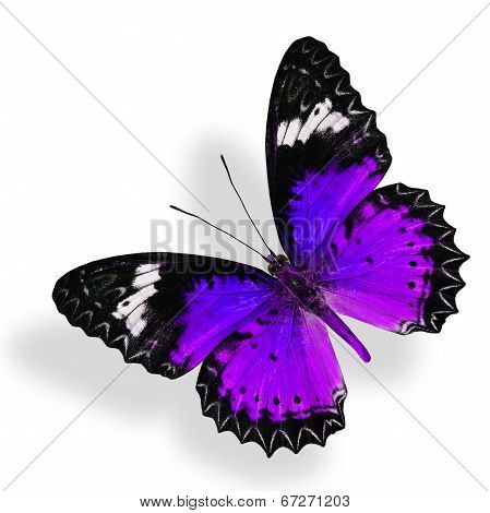 Flying Purple Butterfly Isolated On White Background With Soft Shadow