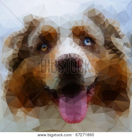 Australian Shepherd face illustration