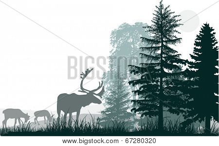 illustration with deers in forest