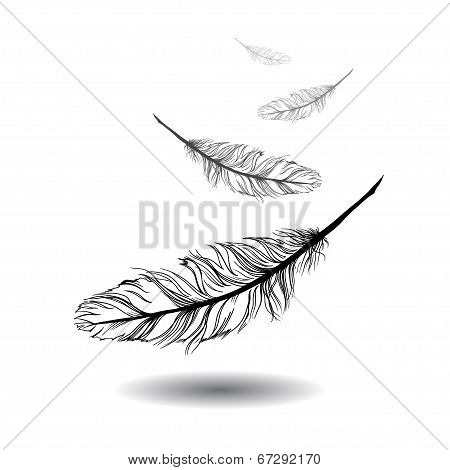 flying feathers with white background. EPS 10
