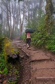 picture of porter  - A heavily ladened porter is heading up the trail to a campsite with a trekkers bag - JPG