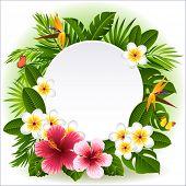 image of tropical plants  - Vector illustration  - JPG