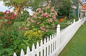 Rose Picket Fence