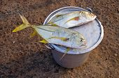picture of kanyakumari  - fresh fish after fishing in market on beach India - JPG