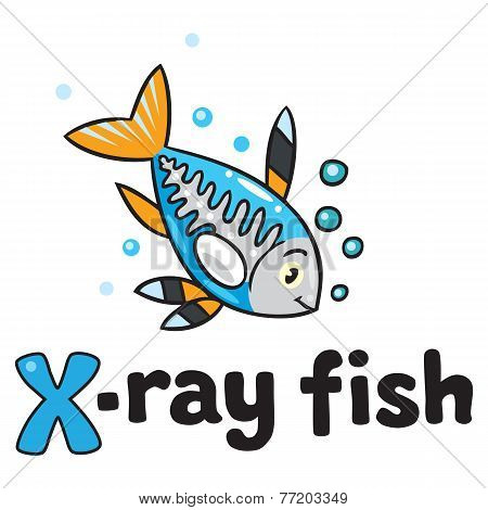 X-ray Fish For Abc. Alphabet X