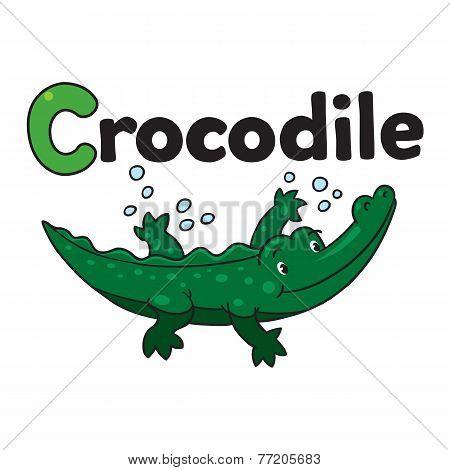 Little crocodile or alligator, for ABC. Alphabet C