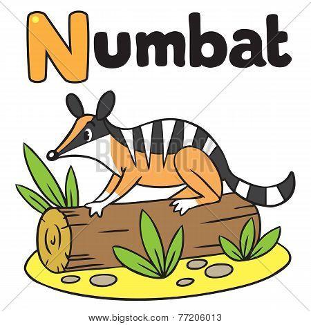 Little numbat for ABC. Alphabet N
