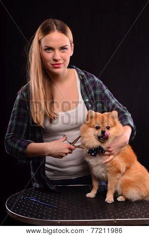 Spitz Dog Grooming
