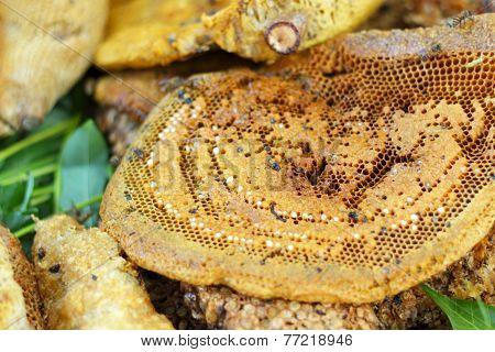 Fresh Honey In The Comb