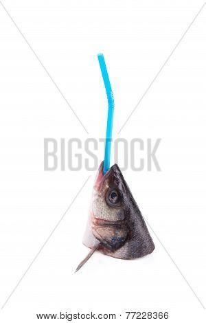 Sea Bass head with straw.