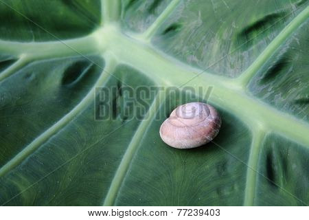 Shell Of  Snail