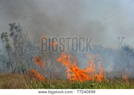 Fierce brushfire with red flames and smoke, Kakadu National Park, Australia