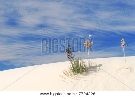 Cactus Growing In The White Sand Dunes National Park