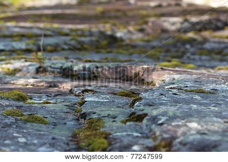 Growing moss between stepping stones.