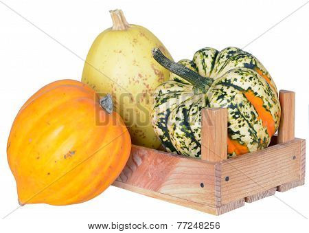 Mini Pumpkin With Crate Isolated On White Background