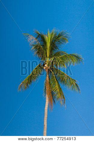 Exotic Getaway Azure Backdrop