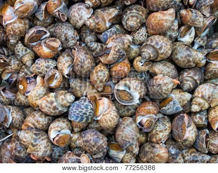 Live Sea Snails Food Background