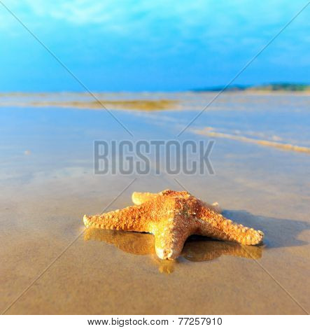 Beach Star Landscape