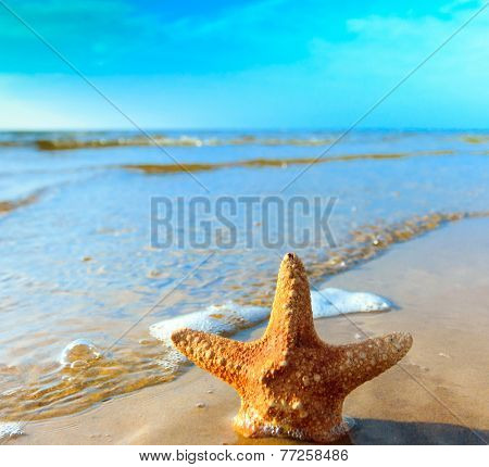 Dream Star Fish