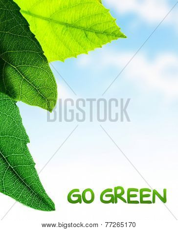 Green leaves border, fresh plant on blue sky background, abstract natural pattern, copy space place for text, go green, spring time season concept