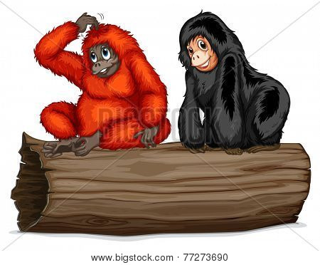 Two chimpanzee sitting on a log